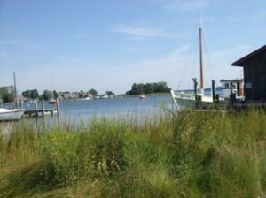 Living Shoreline